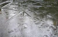 ijs op vijver